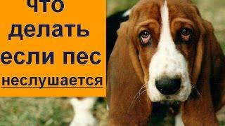 пес непослушный, убегает не слушает команд, тянет что делать