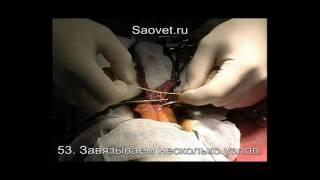 Овариогистерэктомия у кошки