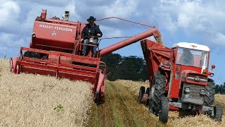 Massey Ferguson 87 Combine - Harvesting Barley | Old Timer | MF 135 | Harvesting Event - Aars 2017