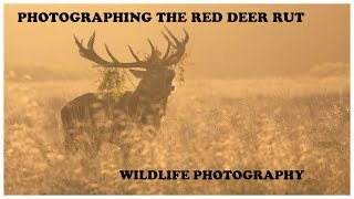 Photographing the Red Deer Rut
