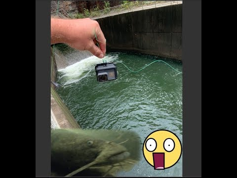 GoPro Finds MASSIVE Catfish AND Striper  In A Spillway!