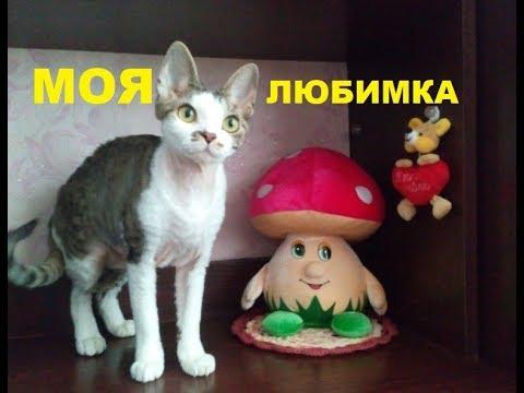 Корниш  породы кошек Корниш Рекс. Характер