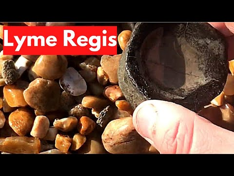 Fossil Hunting At Lyme Regis [2020]
