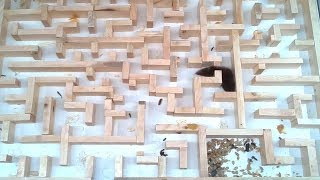 Download Bigger, tighter mouse maze experiments Mp3 and Videos