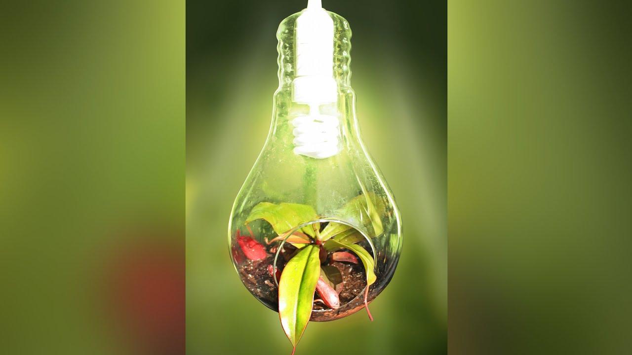 wundersch n fleischfressende pflanze als deko lampe youtube. Black Bedroom Furniture Sets. Home Design Ideas