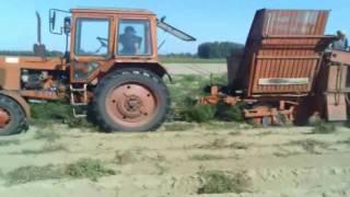 Grimme Europa Standard and Mtz 82 Potato harvest