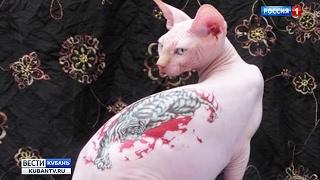 Правозащитники не видят ничего издевательского в тату на животных