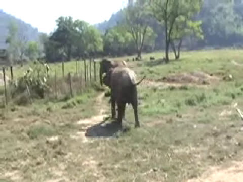 Asian Elephants Console The Distressed | Video