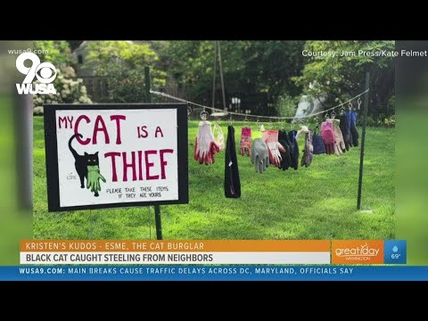 Esme-the-cat-burglar-Kristens-Kudos