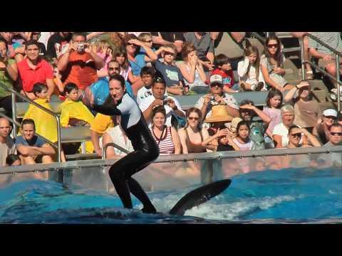 Awesome SeaWorld -