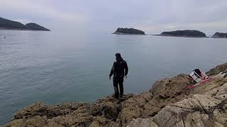 남해 미조 무늬오징어 2시간 만에 마릿수 조황