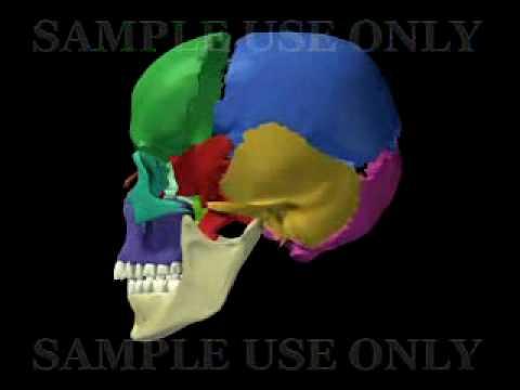 Huesos de Cráneo en español (sample use only) - YouTube