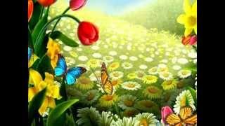 Красивые бабочки. Лето и бабочки.
