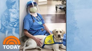 Meet The Dog Who Is Helping Spread Calm And Comfort In The ER | TODAY