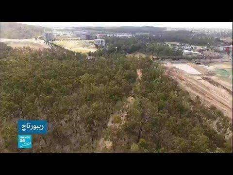 إزالة الغابات في أستراليا لتربية المواشي  - نشر قبل 2 ساعة