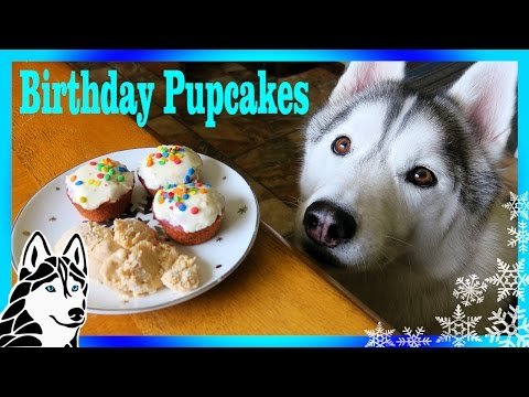 EASY BIRTHDAY CUPCAKES for Dogs & ICE CREAM FOR DOGS | Snow Dogs Snacks 69 | DIY Dog Treats