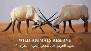 عبيد العوني في محمية المها للحيوانات البرية الجزء 1