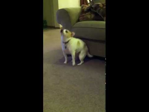"Look At This Dog Shaking Its Butt To Eminem's ""Shake That"""