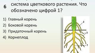 Б6 06 Органы цветковых растений