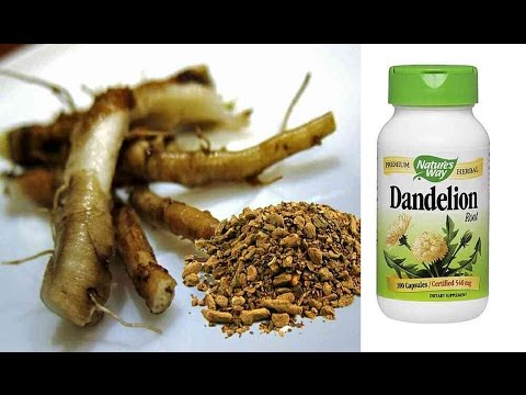 dandelion-root-cancer-cure-at-no-cost!|cancer-treatment-with-dandelion-root-tea