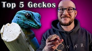 Top 5 BEST Geckos | Great Pets In A Small Package