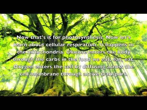 photosynthesis rap song Photosynthesis rap song photosynthesis rap song - title ebooks : photosynthesis rap song - category : kindle and ebooks pdf - author : ~ unidentified.