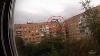 Гигантский палочник зафиксирован на пленку в России?