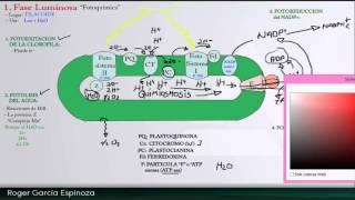Biologia - Fotosintesis parte 2 (Fase Luminosa y Oscura)