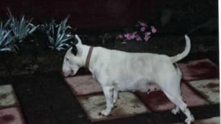 My Heart, My Life, Will Never Be The Same ♥   R.i.p Amy // Mydog...mybffe♥