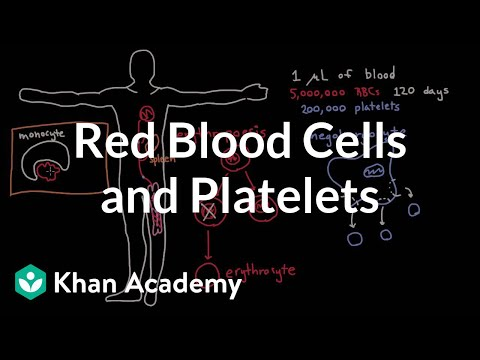 The life and times of RBCs and platelets