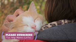 2 Hours Calming Music For Cats. Try it Today and Be Surprised! Cat Sleep Music ☯LCZ88
