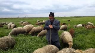 Novruz Bayrami tebriki !!