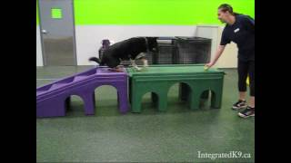 Agility Training With Britnie From Integrated K9