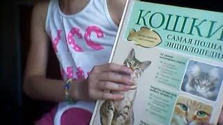 Документы на кошку ! Что нужно занать ?