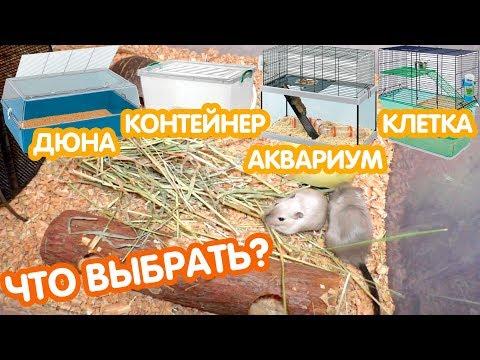 Вопрос: Каковы песчанки как домашние животные Каков ваш опыт?