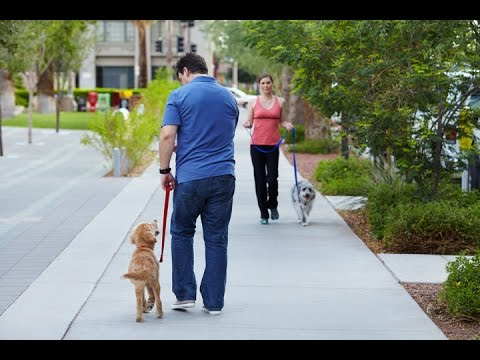 how-to-train-your-dog-to-not-pull-on-the-leash.-utilize-the-4-powerful-leash-training-tips-in-video
