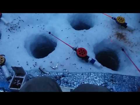 видео: Рыбалка в Омской области Лещ