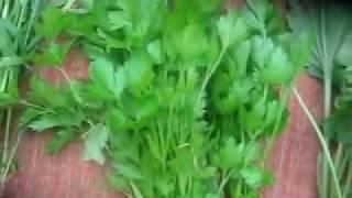 Трава для грызунов  Зелёный корм