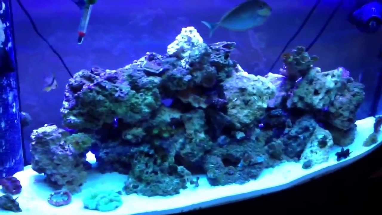 Caribsea oceans direct live sand review on my 72 gallon for Live fish direct