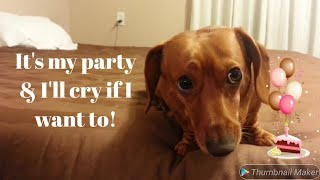 Interview with a Chatty Dachshund: Birthday Edition
