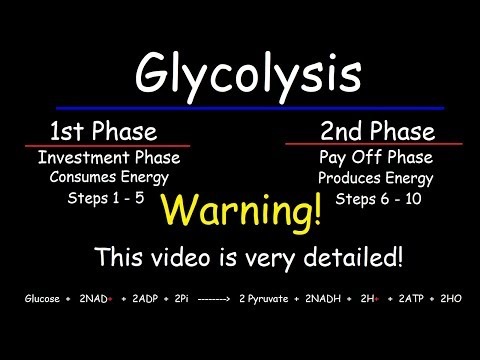 Glycolysis - Biochemistry