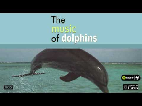 The music of dolphins.  Marcelo Rodríguez. Full Album
