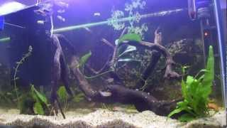 How To Clean A Fish Tank (tropical)