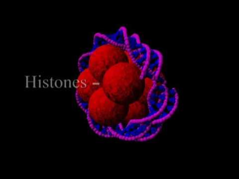 Cellular reproduction - mitosis, cytokinesis