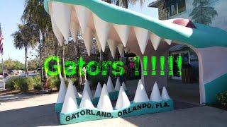 GATORS !!!!!!!