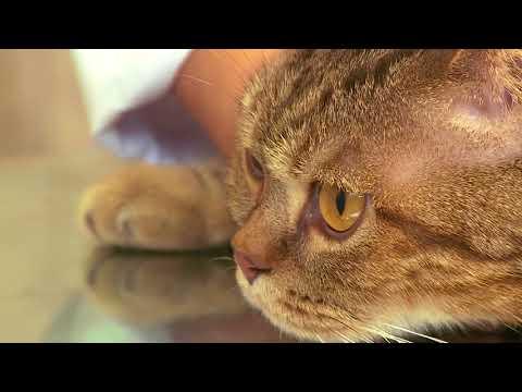 Вопрос: Как дать жидкое лекарство коту из шприца?
