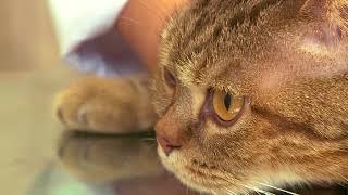 Как дать кошке суспензию от глистов