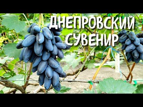 Днепровский сувенир - вкуснейшее открытие этого года!!!