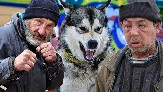 БОМЖИ УКРАЛИ СОБАКУ / bums stole a dog