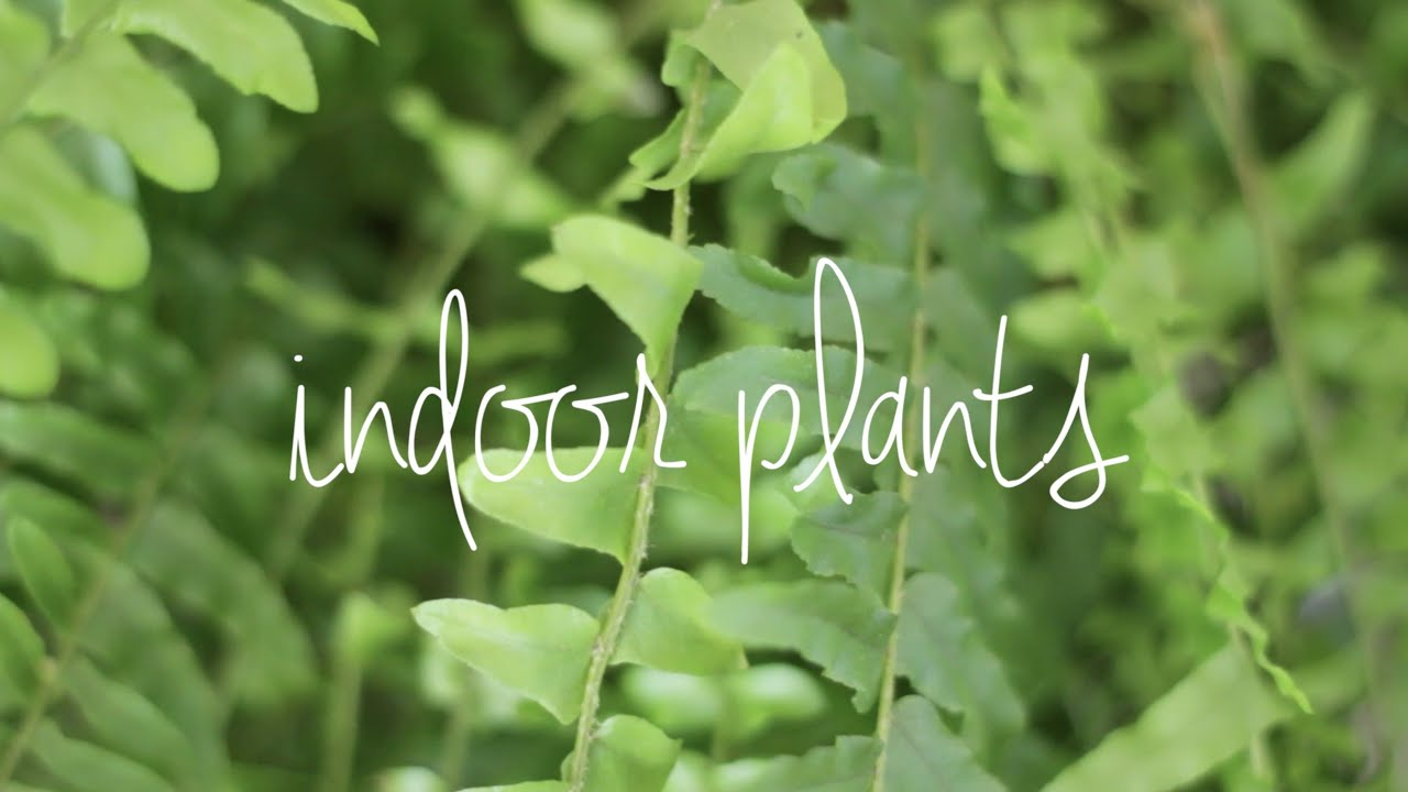 Easy Care Indoor Trees Easy Care Indoor Plants Youtube